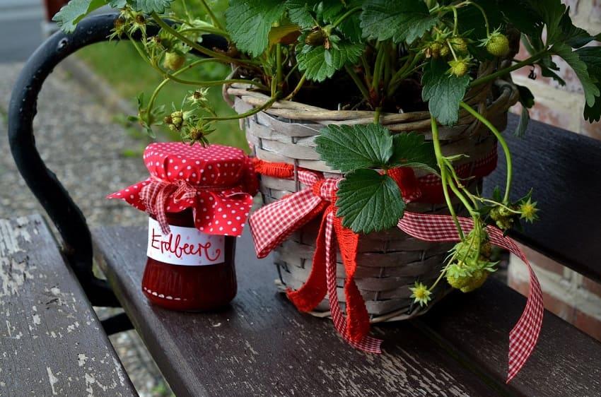 Marmelade aus Erdbeerenlinolsäurearm und ketogen