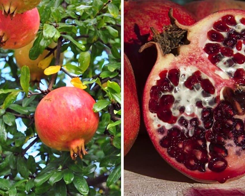 Granatapfel aus Kreta mit Rosenkohl